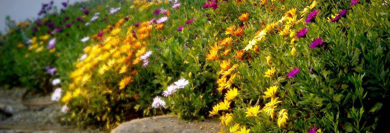 Jardineria Vilaverd